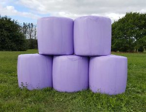 purple silage wraps