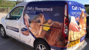 Calf and Youngstock vn