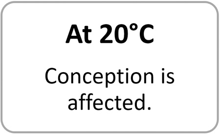 at 20 degrees conception is affected