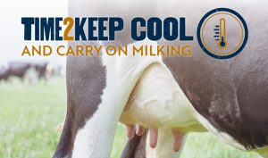 Tactics to keep dairy cows free from heat stress