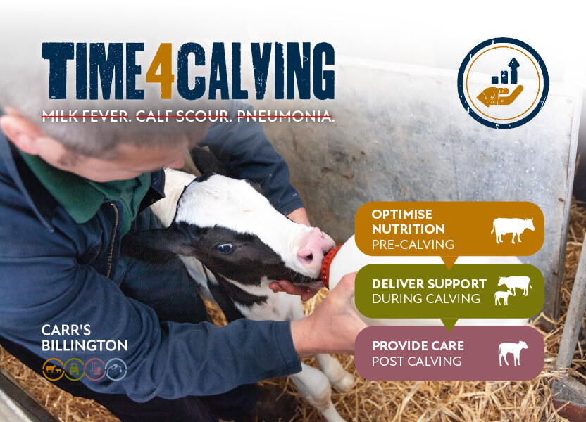 time for calving