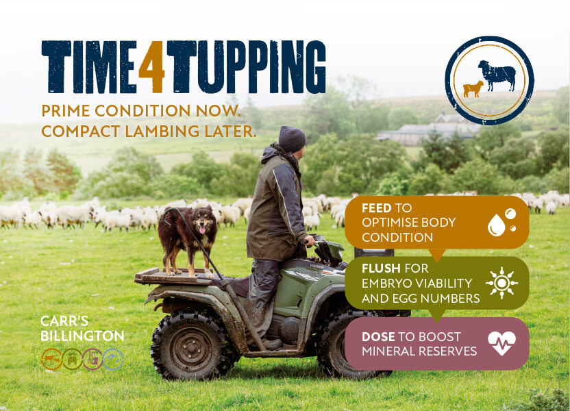 time for tupping